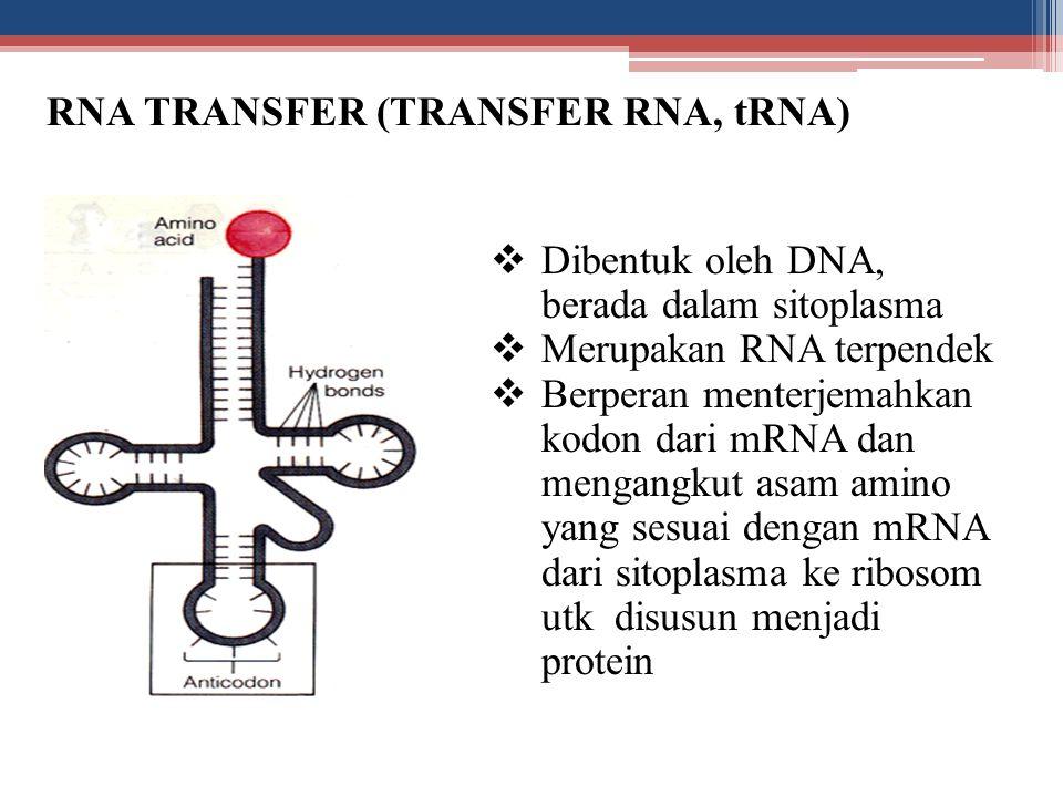 RNA TRANSFER (TRANSFER RNA, tRNA)