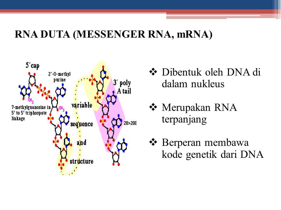 RNA DUTA (MESSENGER RNA, mRNA)