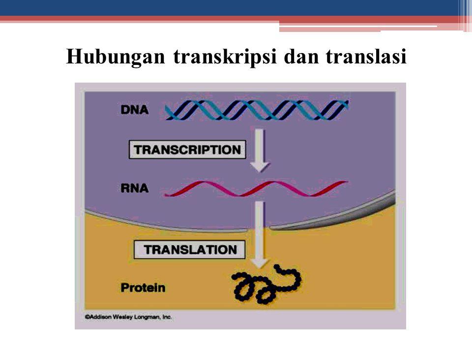 Hubungan transkripsi dan translasi