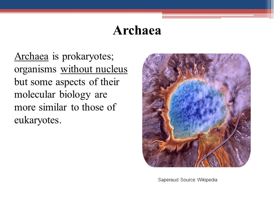 Archaea Archaea is prokaryotes; organisms without nucleus but some aspects of their molecular biology are more similar to those of eukaryotes.