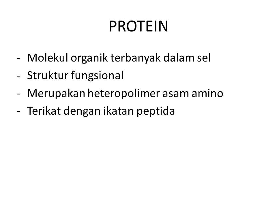PROTEIN Molekul organik terbanyak dalam sel Struktur fungsional
