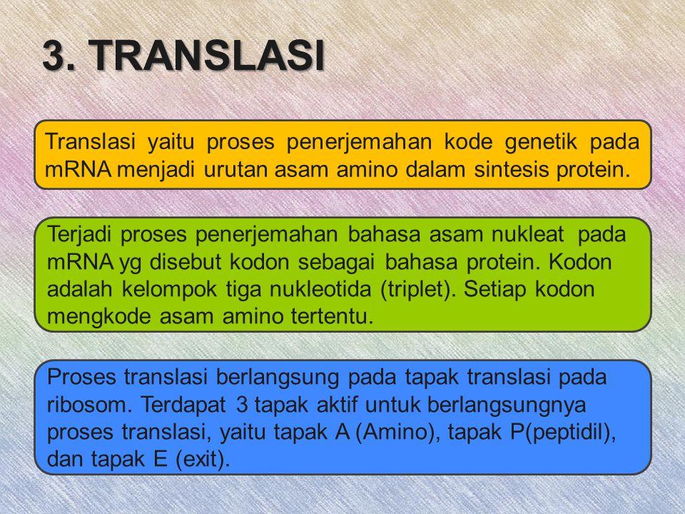 3. TRANSLASI Translasi yaitu proses penerjemahan kode genetik pada mRNA menjadi urutan asam amino dalam sintesis protein.