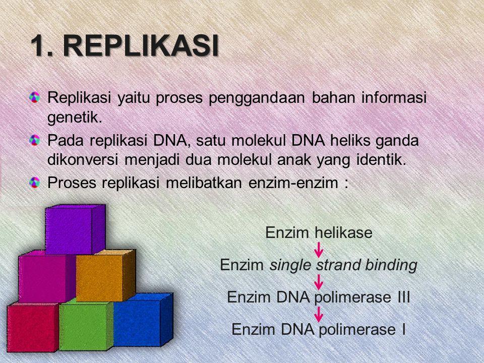 1. REPLIKASI Replikasi yaitu proses penggandaan bahan informasi genetik.