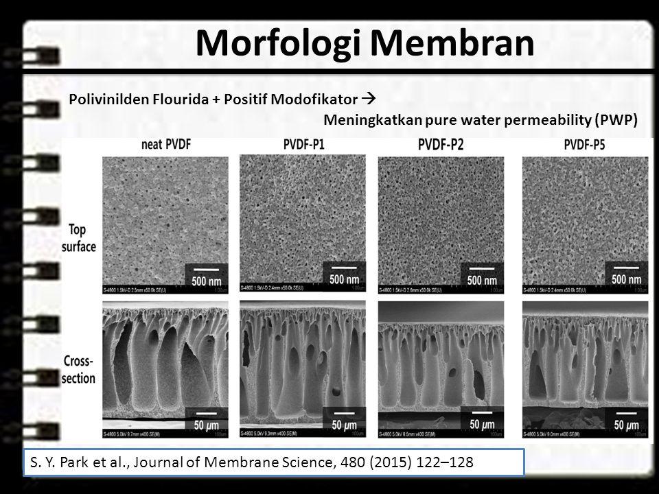 Morfologi Membran Polivinilden Flourida + Positif Modofikator 