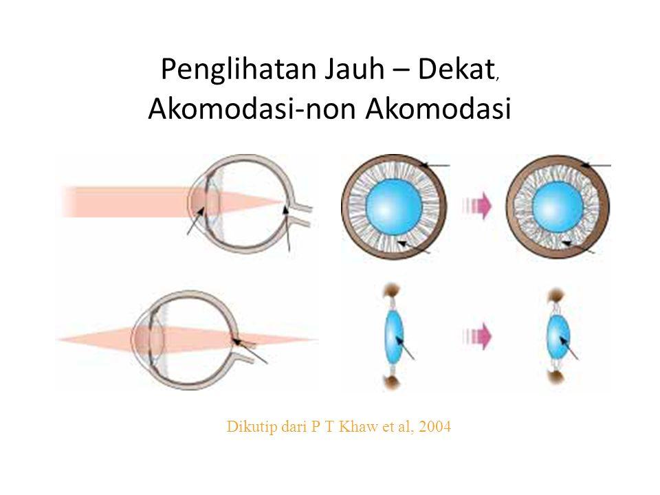 Penglihatan Jauh – Dekat, Akomodasi-non Akomodasi