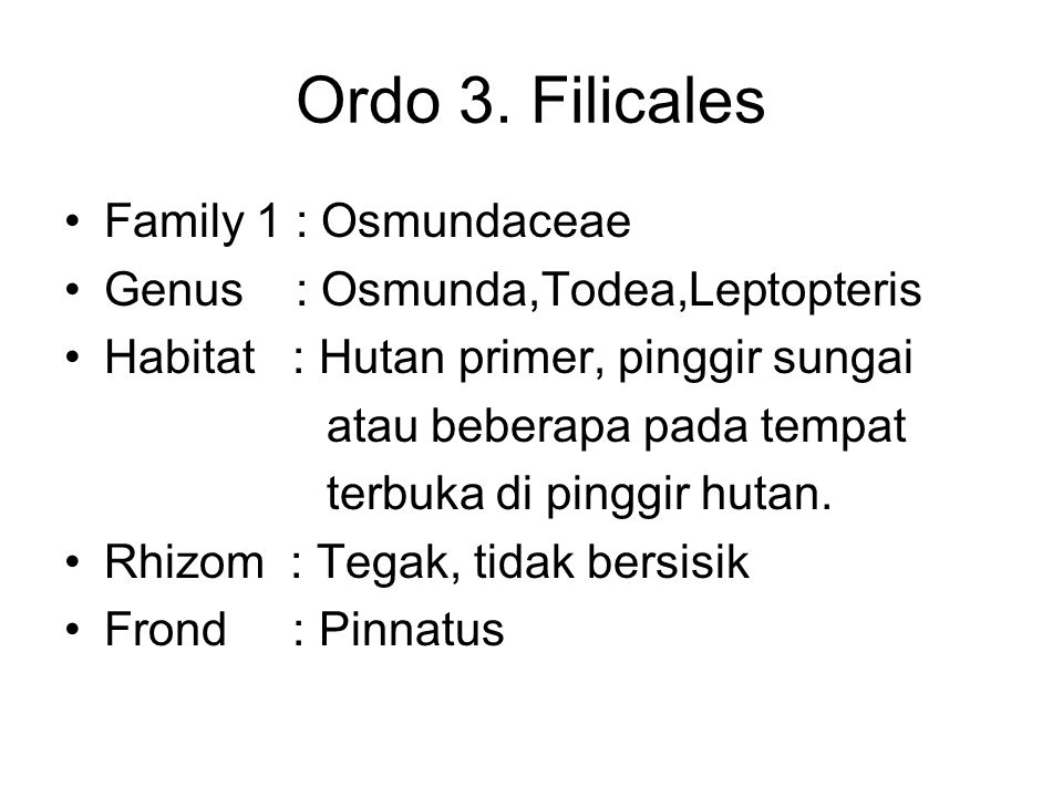 Ordo 3. Filicales Family 1 : Osmundaceae