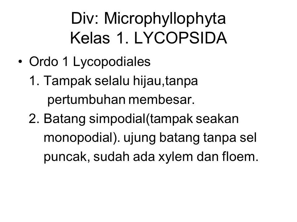 Div: Microphyllophyta Kelas 1. LYCOPSIDA