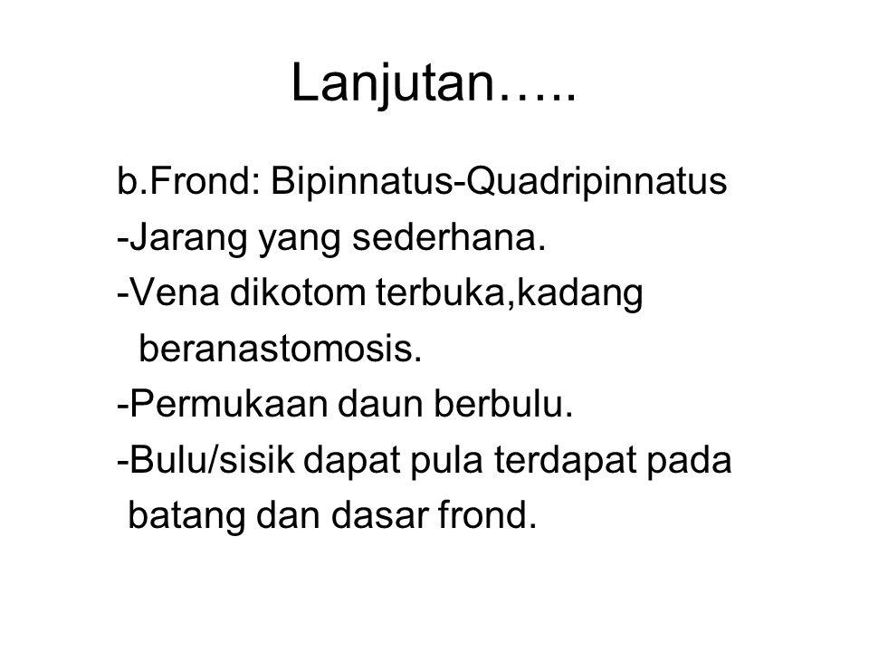 Lanjutan….. b.Frond: Bipinnatus-Quadripinnatus -Jarang yang sederhana.