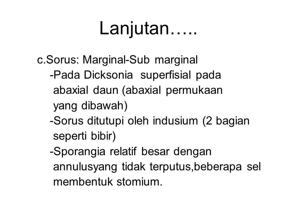 Lanjutan….. c.Sorus: Marginal-Sub marginal