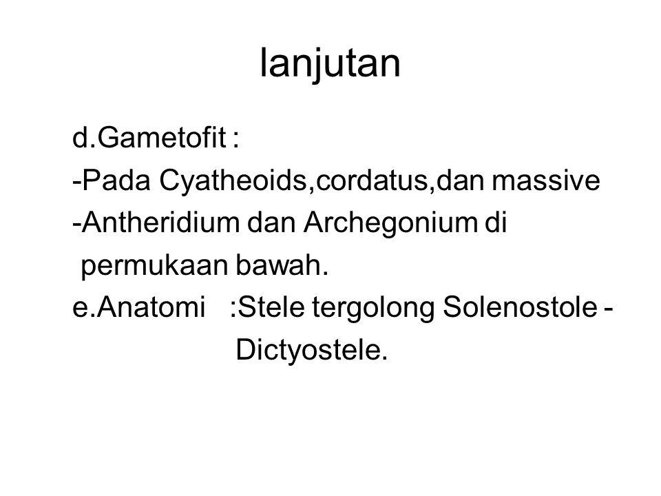 lanjutan d.Gametofit : -Pada Cyatheoids,cordatus,dan massive