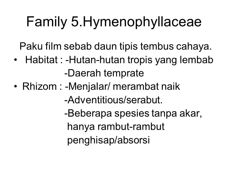 Family 5.Hymenophyllaceae