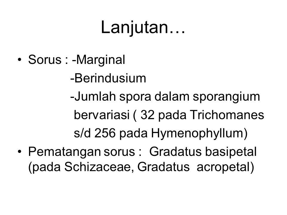 Lanjutan… Sorus : -Marginal -Berindusium