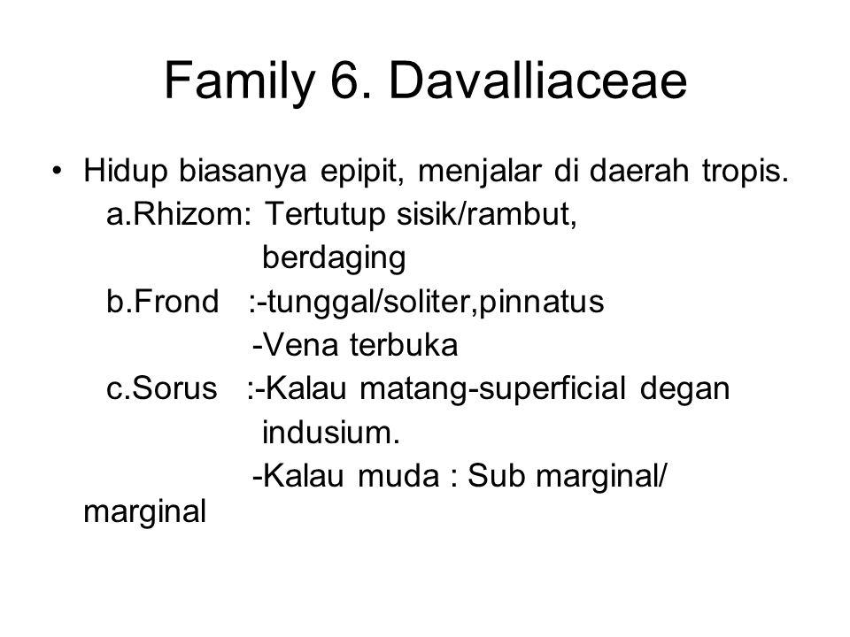 Family 6. Davalliaceae Hidup biasanya epipit, menjalar di daerah tropis. a.Rhizom: Tertutup sisik/rambut,