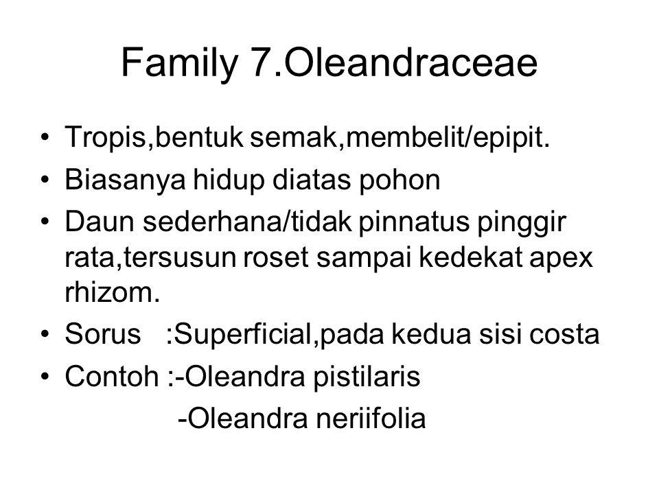 Family 7.Oleandraceae Tropis,bentuk semak,membelit/epipit.