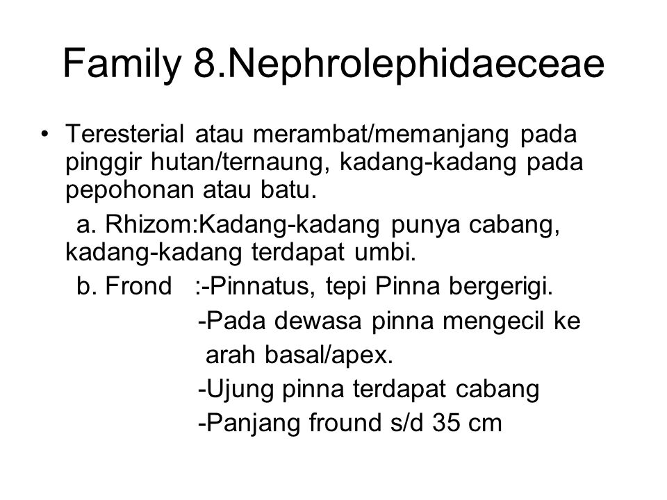 Family 8.Nephrolephidaeceae