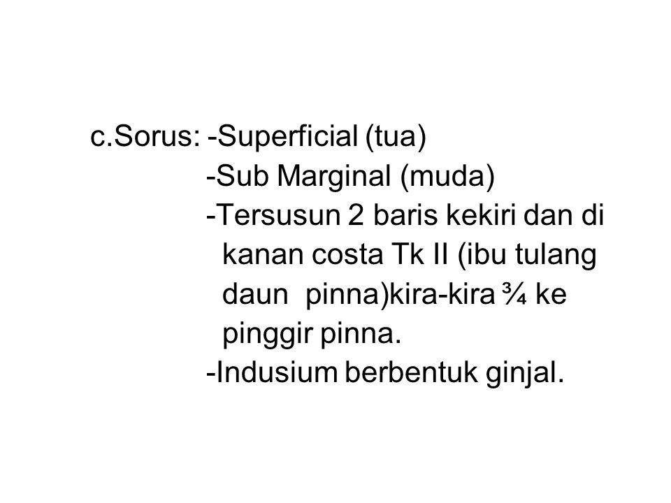 c.Sorus: -Superficial (tua)