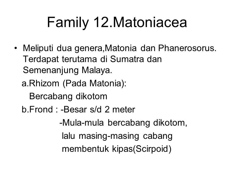 Family 12.Matoniacea Meliputi dua genera,Matonia dan Phanerosorus. Terdapat terutama di Sumatra dan Semenanjung Malaya.