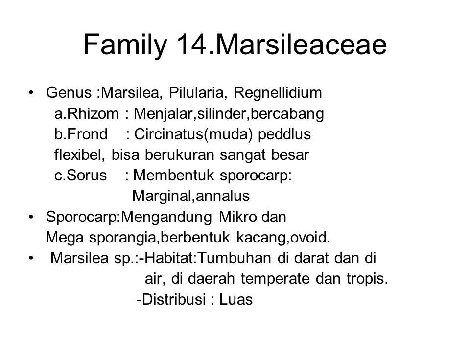 Family 14.Marsileaceae Genus :Marsilea, Pilularia, Regnellidium