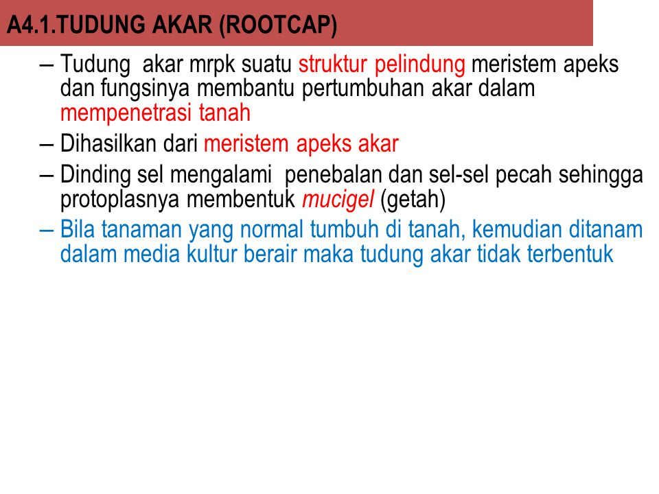 A4.1.TUDUNG AKAR (ROOTCAP)