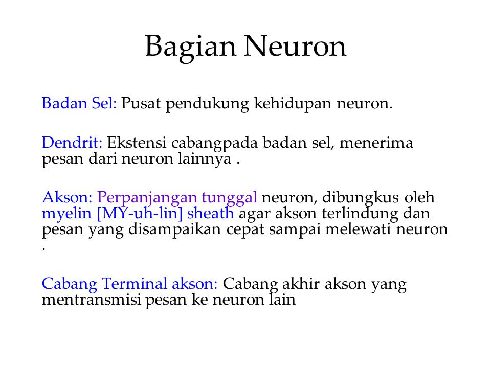 Bagian Neuron Badan Sel: Pusat pendukung kehidupan neuron.