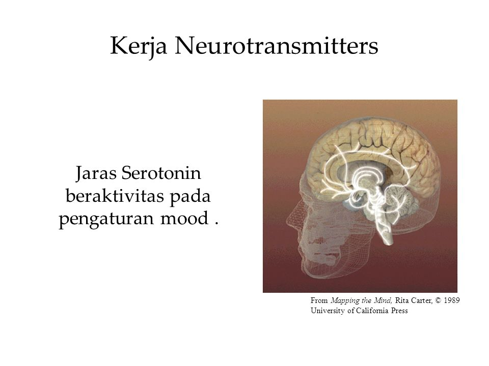 Kerja Neurotransmitters