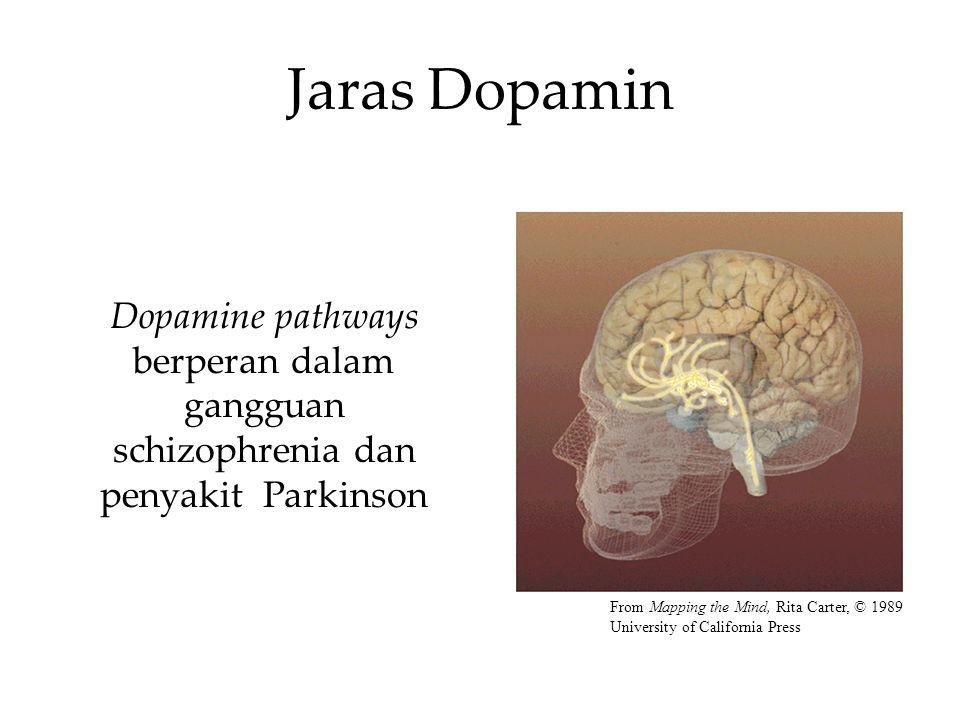 Jaras Dopamin Dopamine pathways berperan dalam gangguan schizophrenia dan penyakit Parkinson.