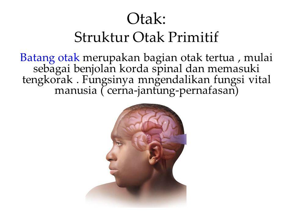 Otak: Struktur Otak Primitif
