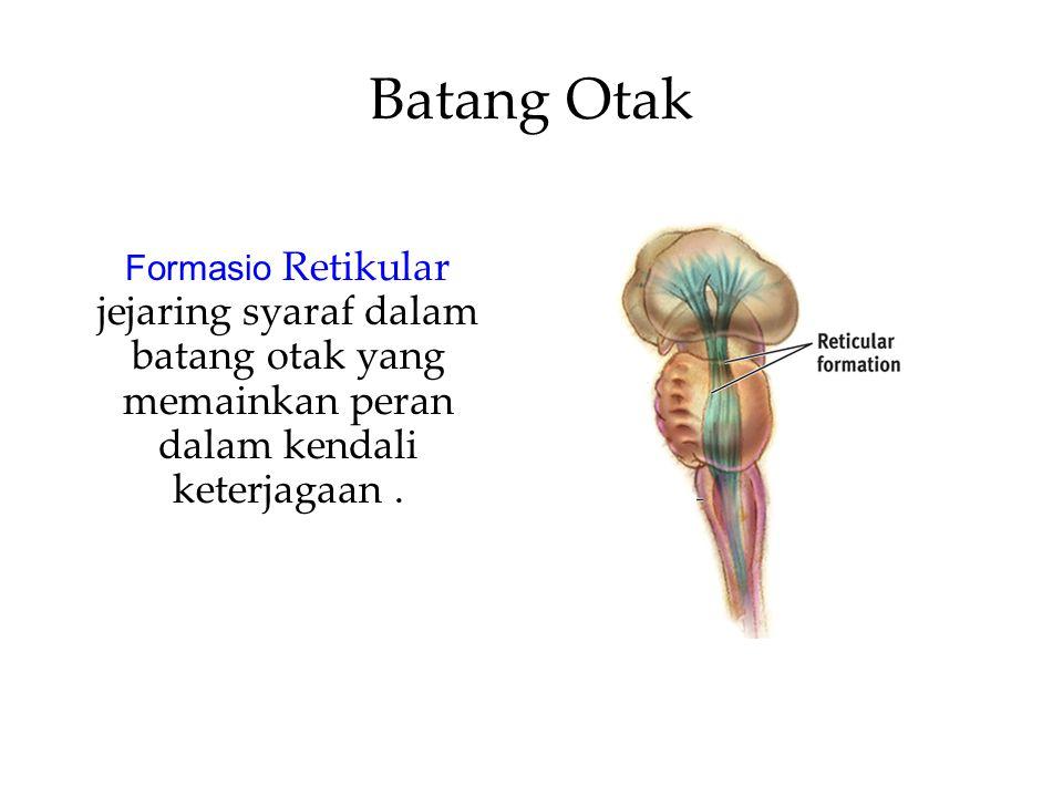 Batang Otak Formasio Retikular jejaring syaraf dalam batang otak yang memainkan peran dalam kendali keterjagaan .