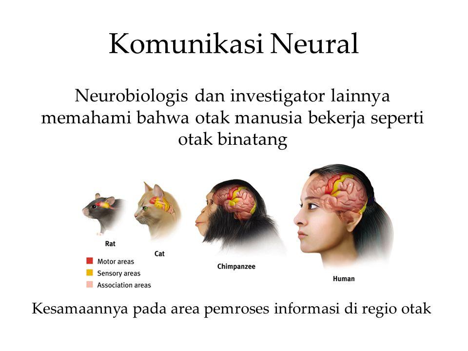 Kesamaannya pada area pemroses informasi di regio otak