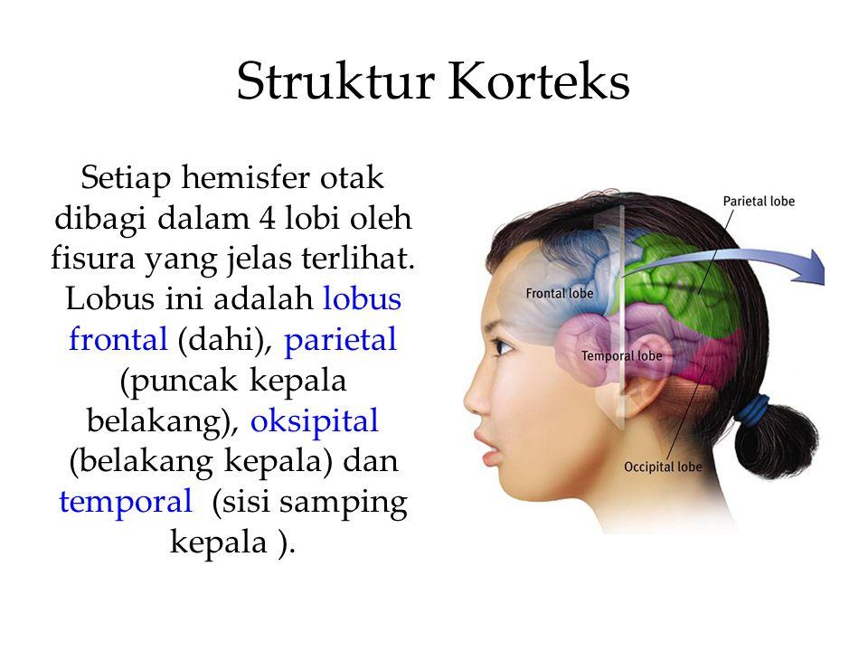 Struktur Korteks
