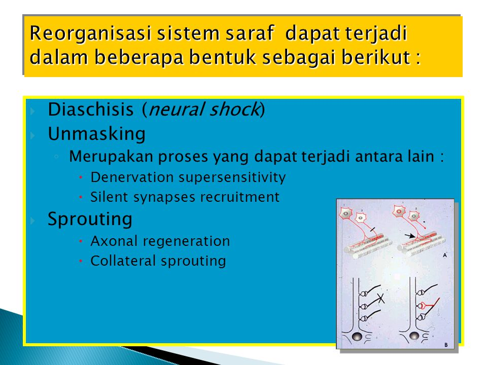 Reorganisasi sistem saraf dapat terjadi dalam beberapa bentuk sebagai berikut :