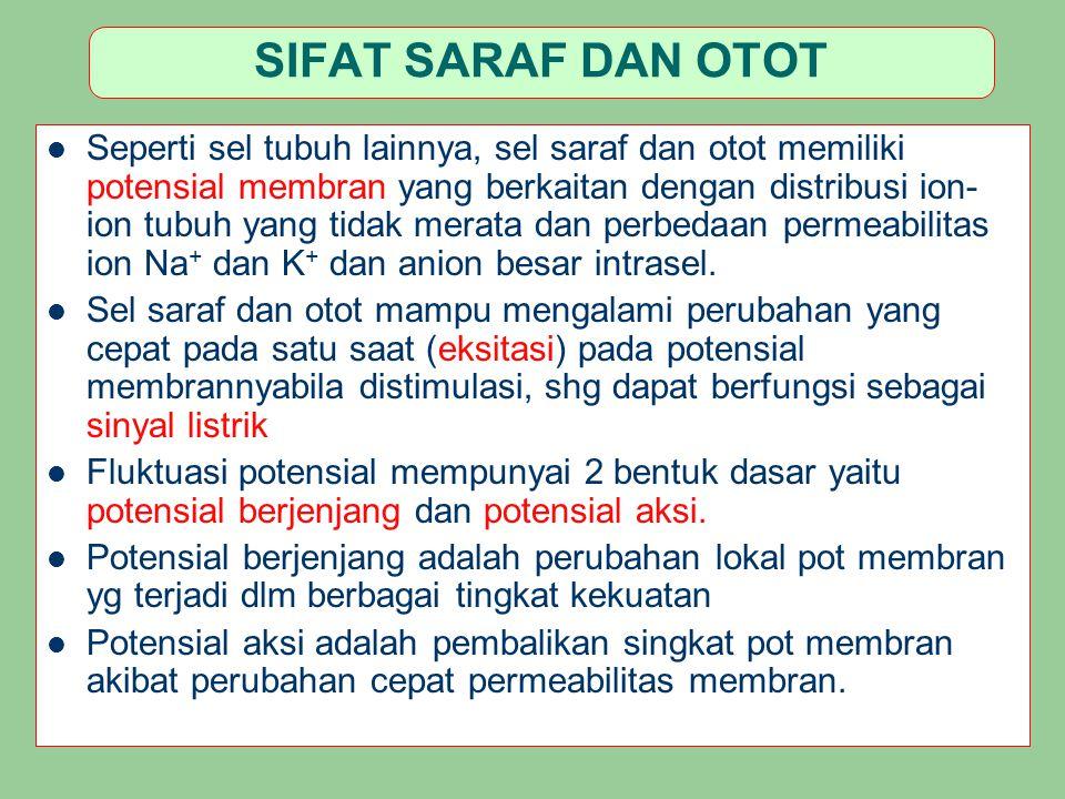 SIFAT SARAF DAN OTOT