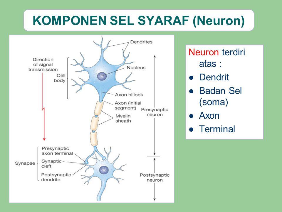 KOMPONEN SEL SYARAF (Neuron)