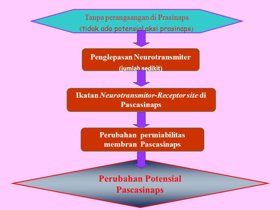 Perubahan Potensial Pascasinaps