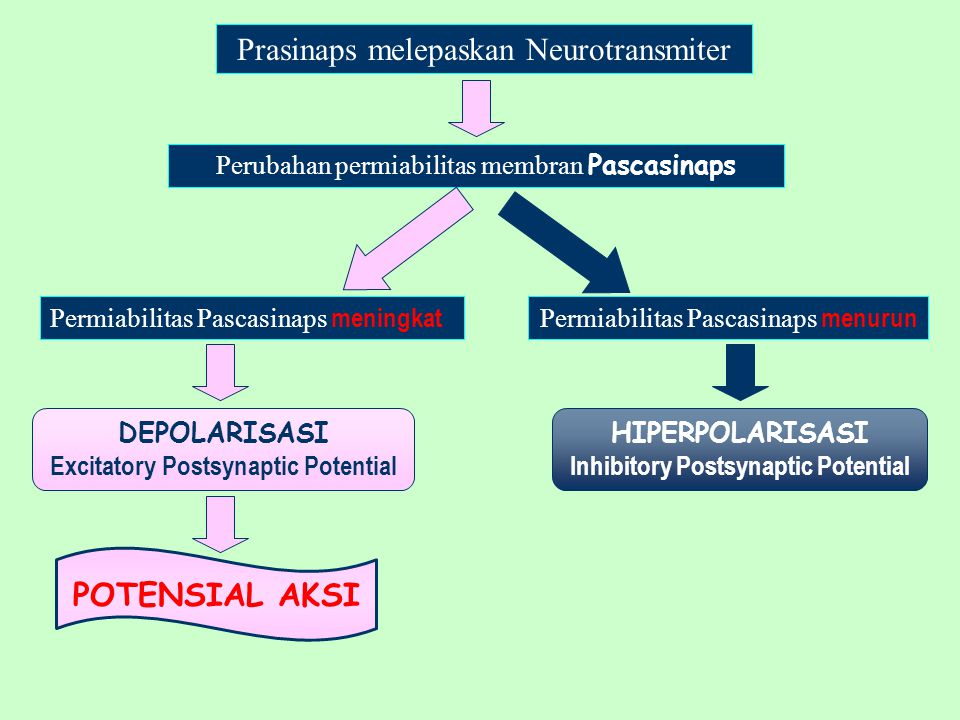 Prasinaps melepaskan Neurotransmiter
