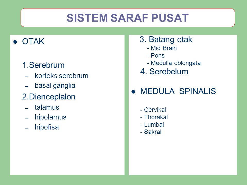 SISTEM SARAF PUSAT OTAK 1.Serebrum MEDULA SPINALIS 2.Dienceplalon