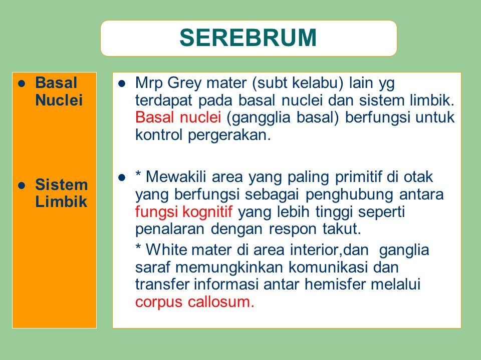 SEREBRUM Basal Nuclei Sistem Limbik