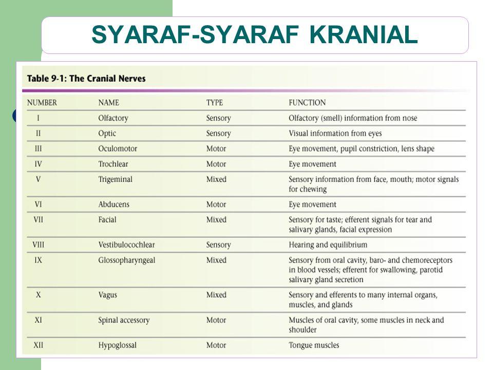 SYARAF-SYARAF KRANIAL