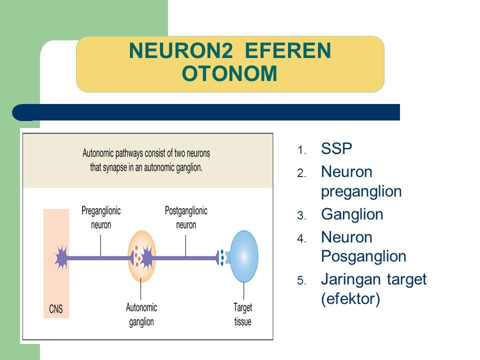 NEURON2 EFEREN OTONOM SSP Neuron preganglion Ganglion