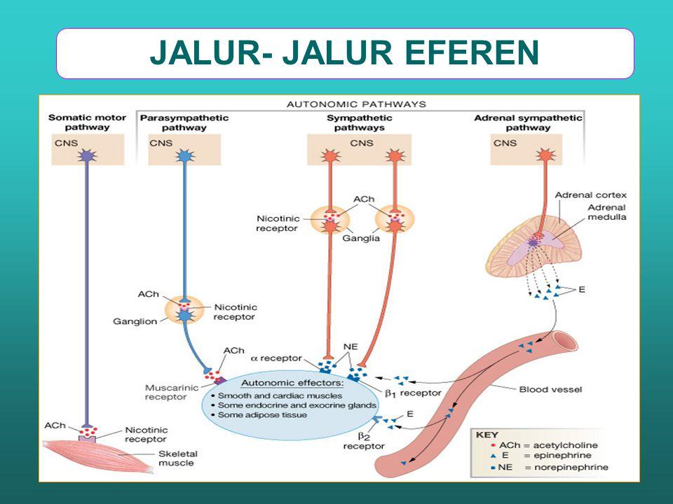 JALUR- JALUR EFEREN
