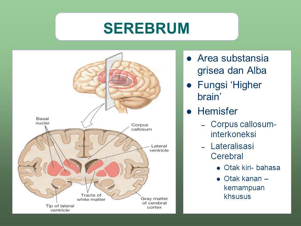 SEREBRUM Area substansia grisea dan Alba Fungsi 'Higher brain'