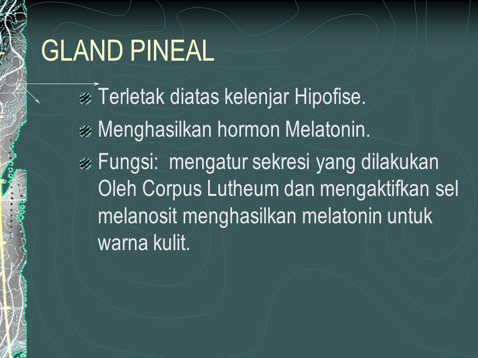GLAND PINEAL Terletak diatas kelenjar Hipofise.