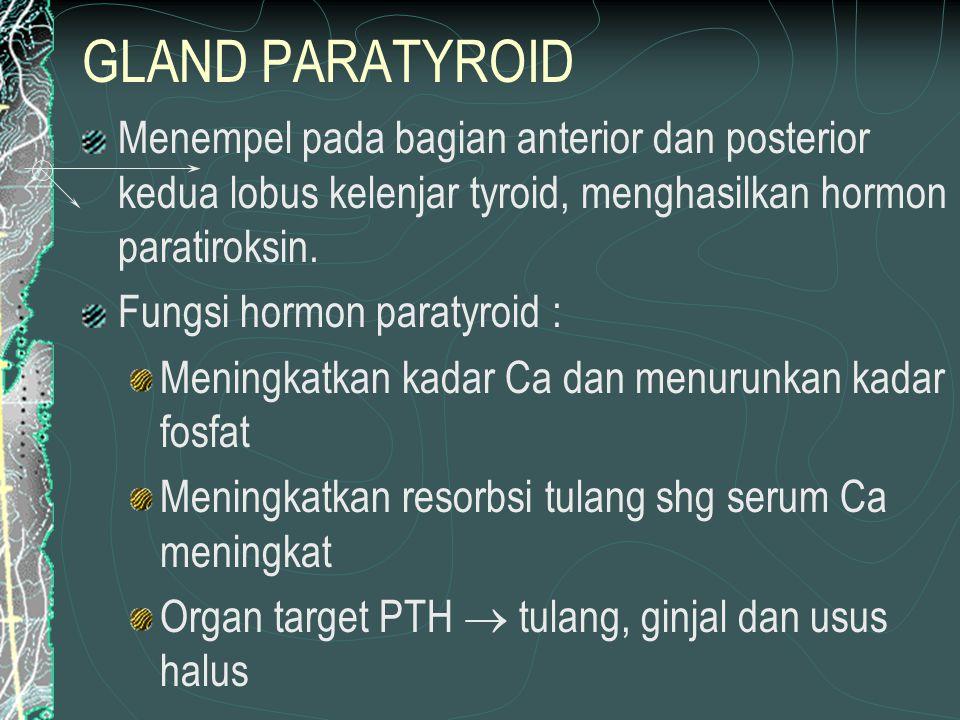 GLAND PARATYROID Menempel pada bagian anterior dan posterior kedua lobus kelenjar tyroid, menghasilkan hormon paratiroksin.