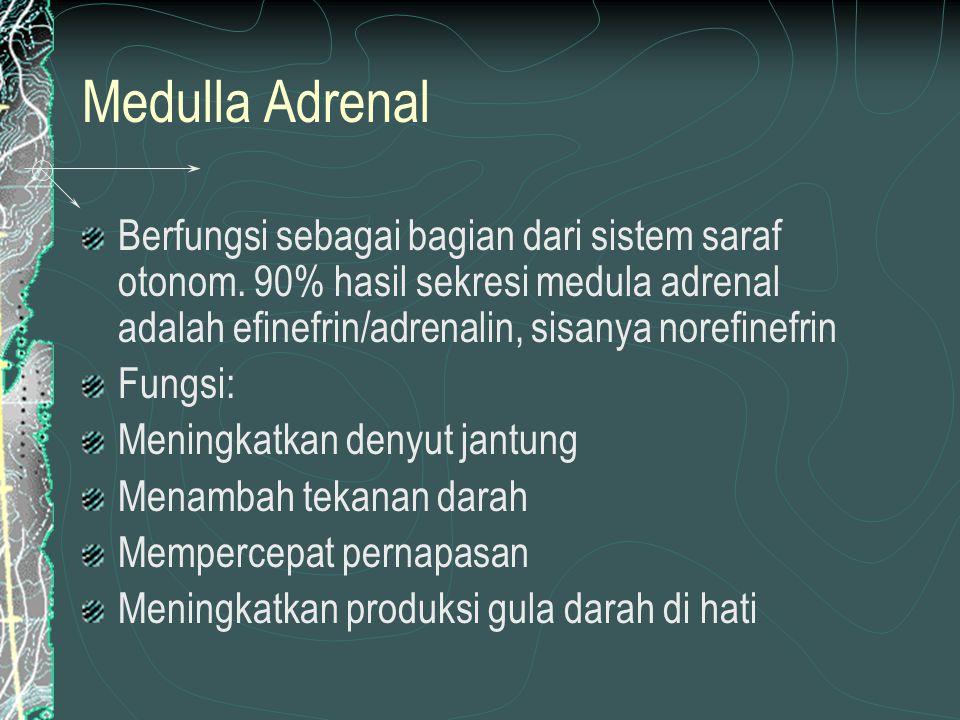 Medulla Adrenal Berfungsi sebagai bagian dari sistem saraf otonom. 90% hasil sekresi medula adrenal adalah efinefrin/adrenalin, sisanya norefinefrin.