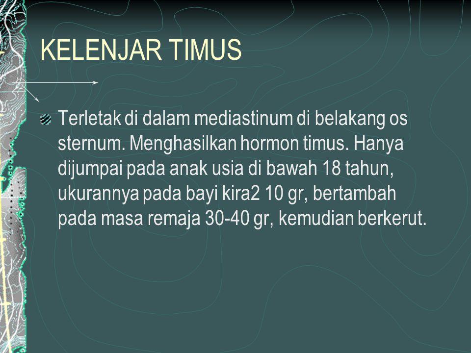 KELENJAR TIMUS