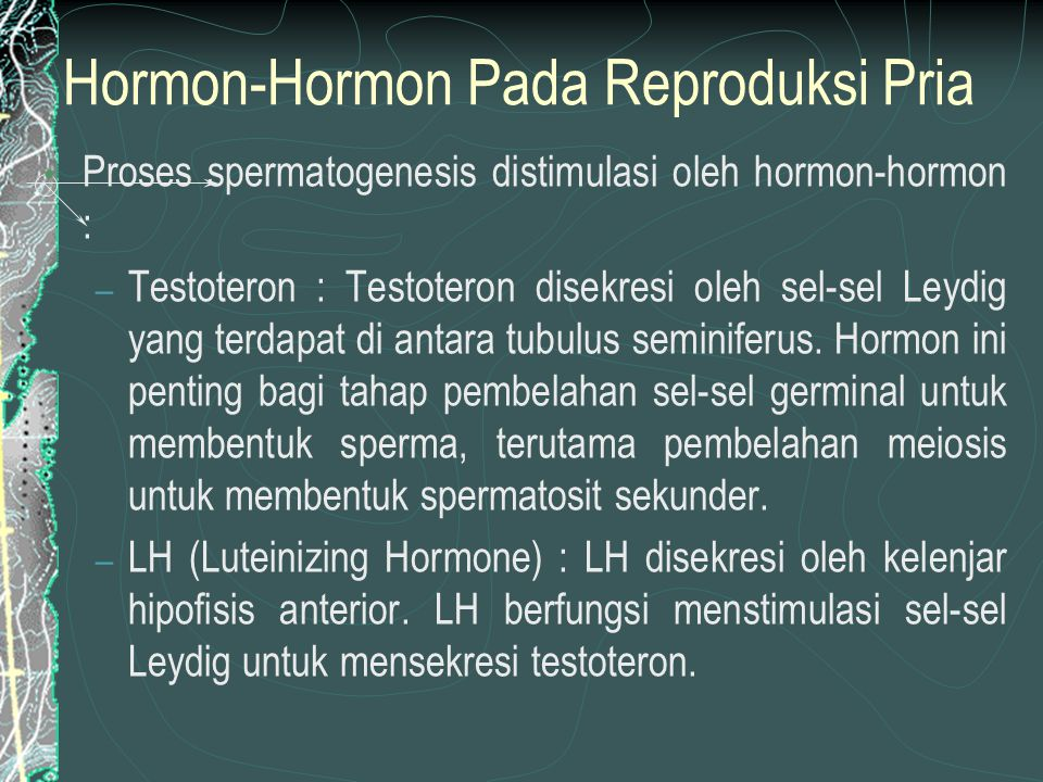 Hormon-Hormon Pada Reproduksi Pria