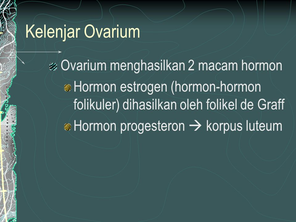 Kelenjar Ovarium Ovarium menghasilkan 2 macam hormon