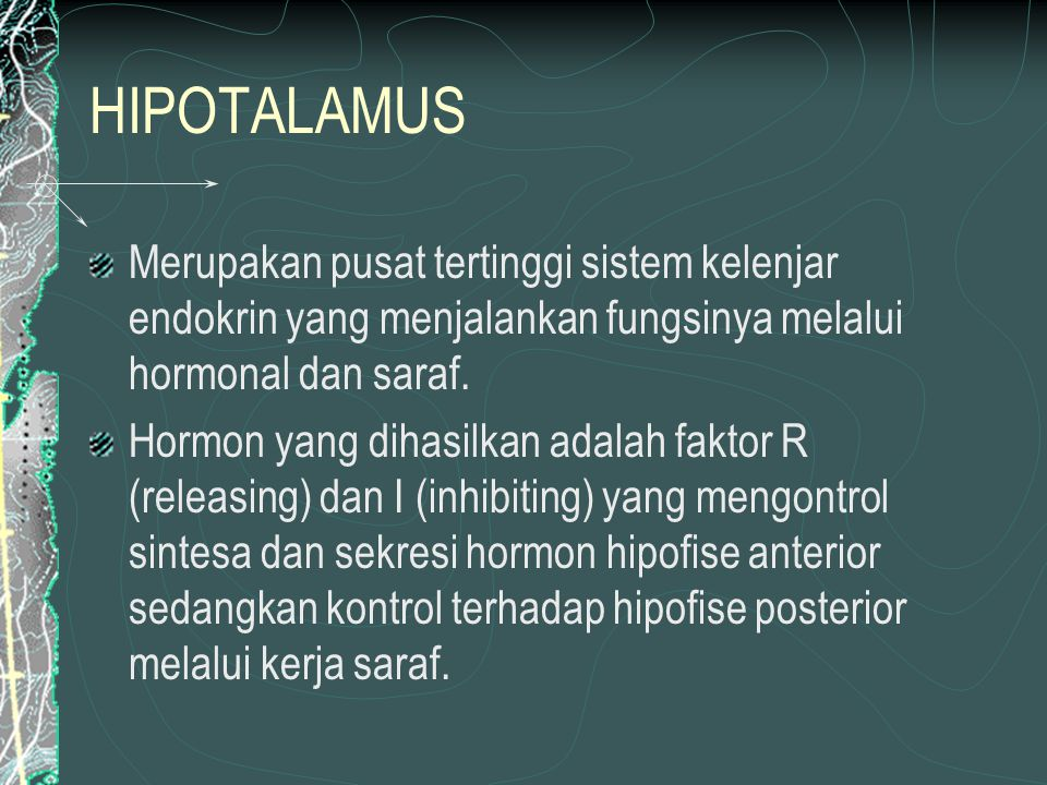 HIPOTALAMUS Merupakan pusat tertinggi sistem kelenjar endokrin yang menjalankan fungsinya melalui hormonal dan saraf.