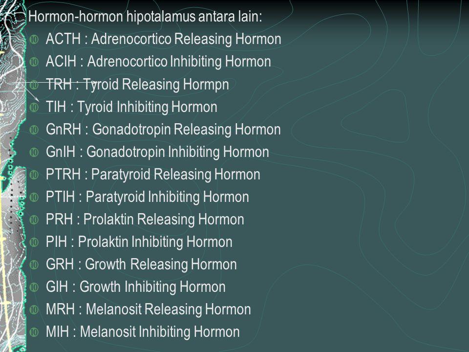 Hormon-hormon hipotalamus antara lain: