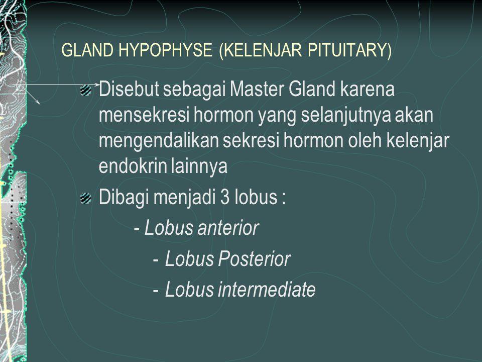 GLAND HYPOPHYSE (KELENJAR PITUITARY)